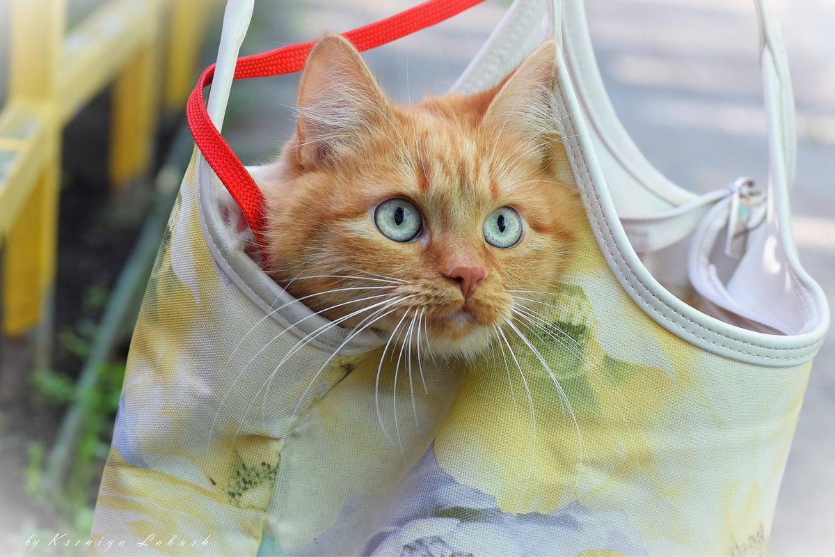 Кошка в сумке - Ксения Лабуш