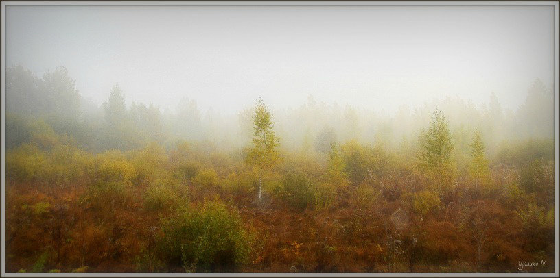 Туман - Михаил Цегалко