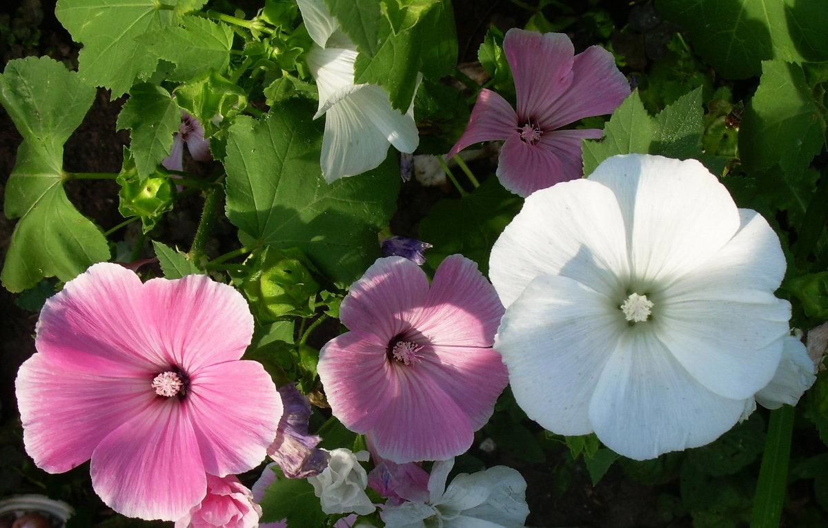 Летние цветы - татьяна