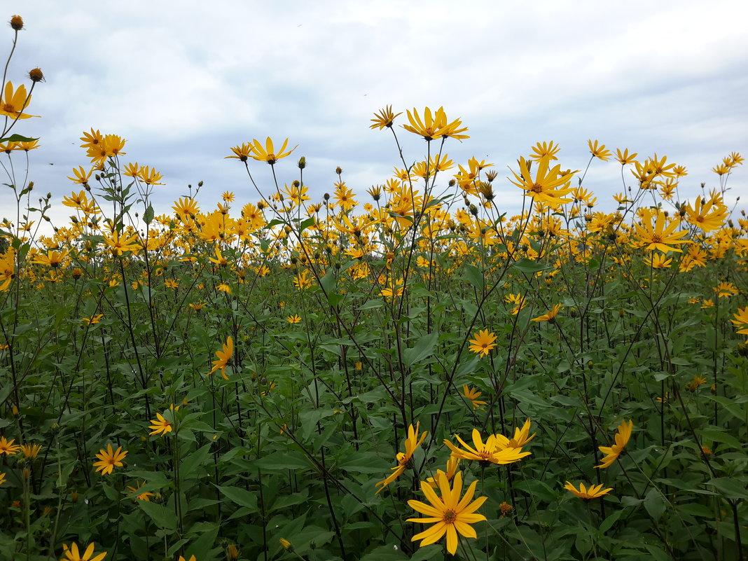 Цветы - Глен Ленкин