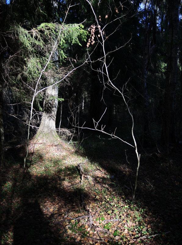 добро пожаловать в лес - sv.kaschuk