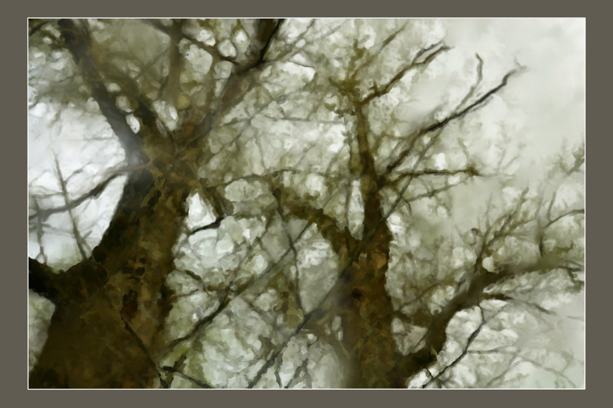 старые тополя - павел бритшев