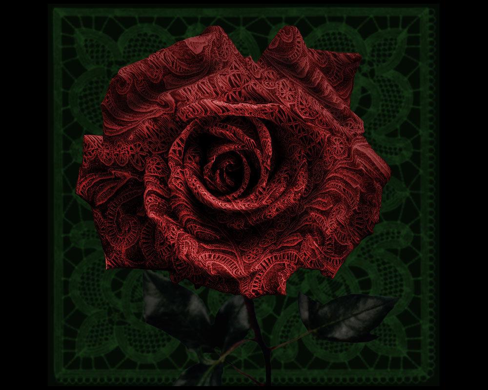 Роза кружево - Nn semonov_nn