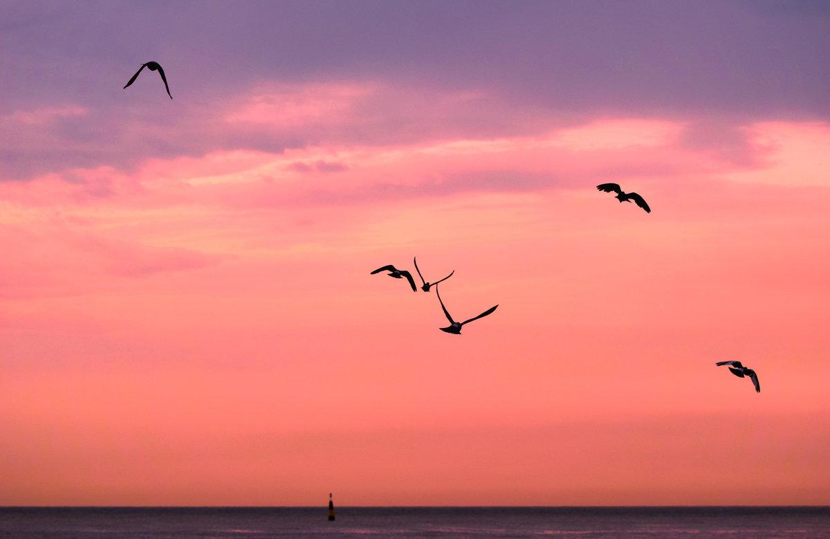 Птицы уходят в небо - Александр Сидоров
