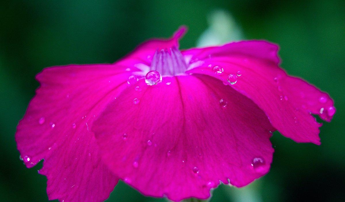 10 капель дождя ... - Константин