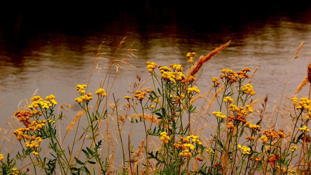 растительность у озера - Александр Прокудин