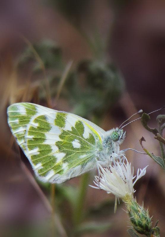 бабочка - Марина Ринкашикитока