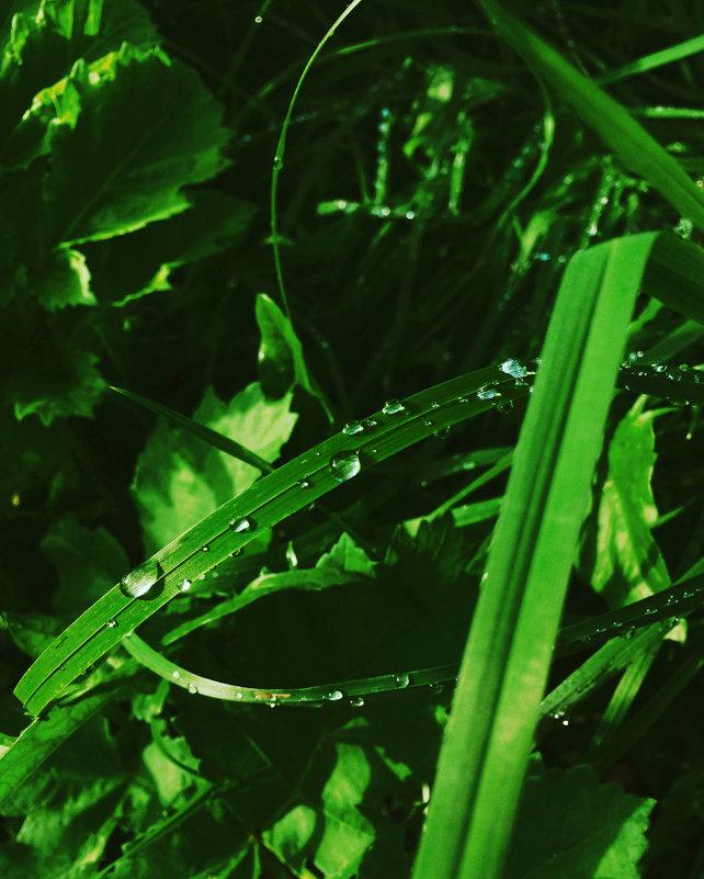 После дождичка - Валерия Святогорова