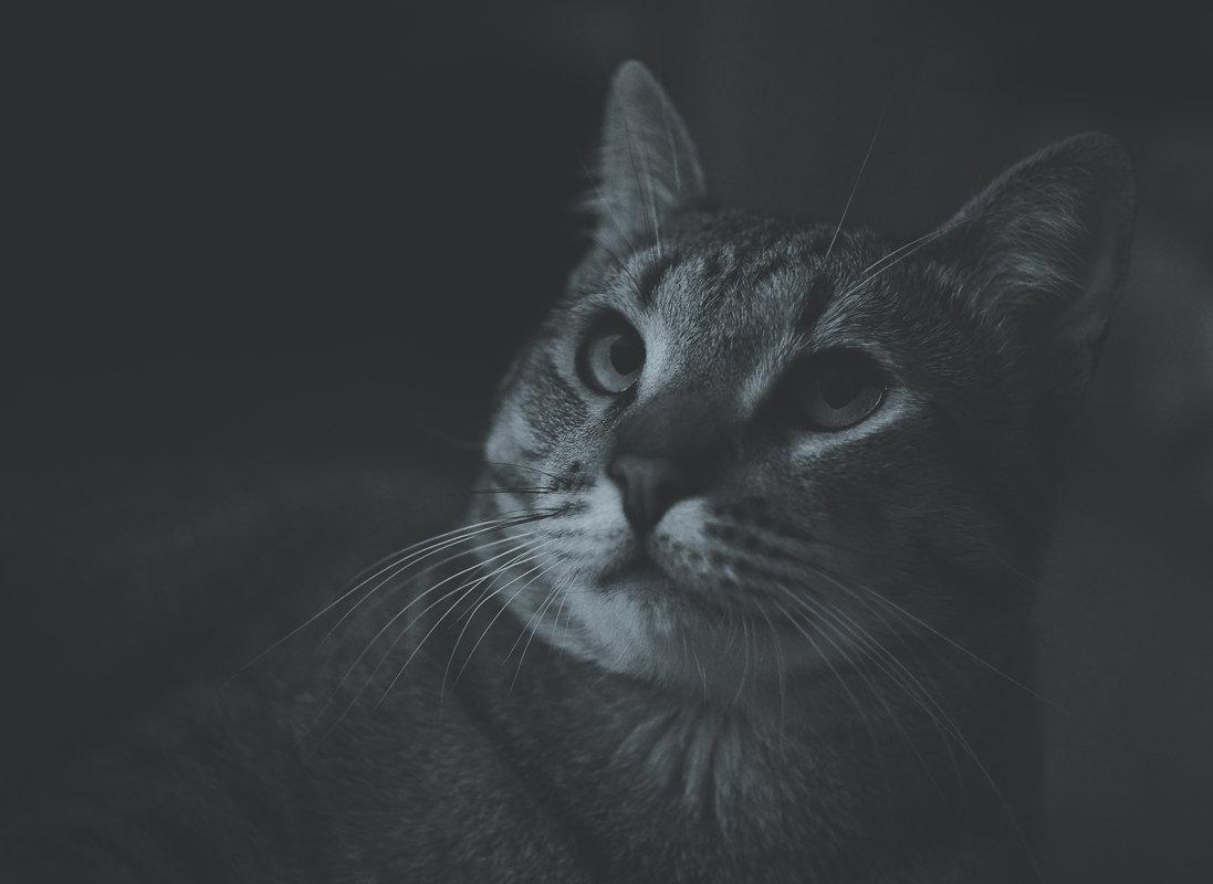 Соня, сумеречный кот) - Дмитрий