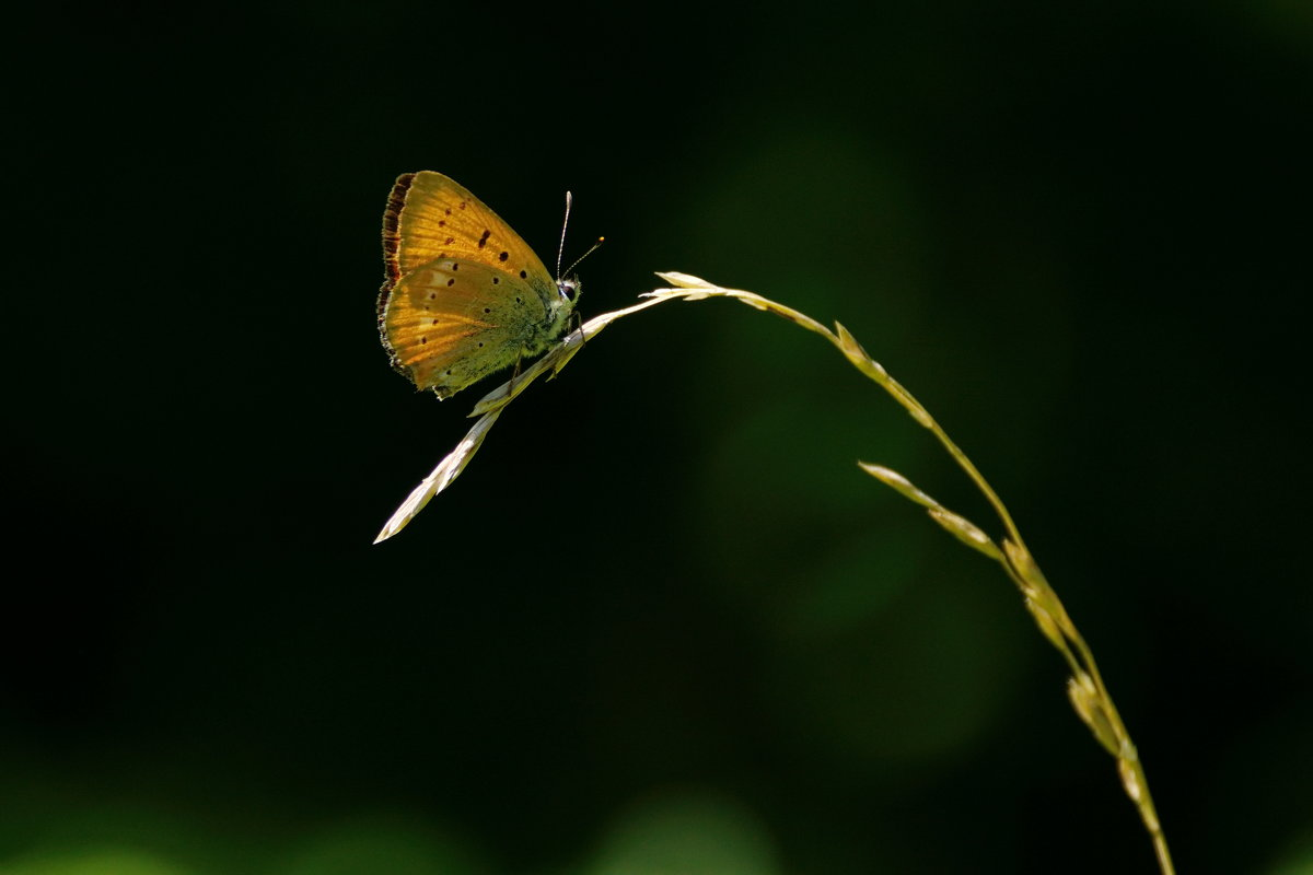 Бабочка - Надежда