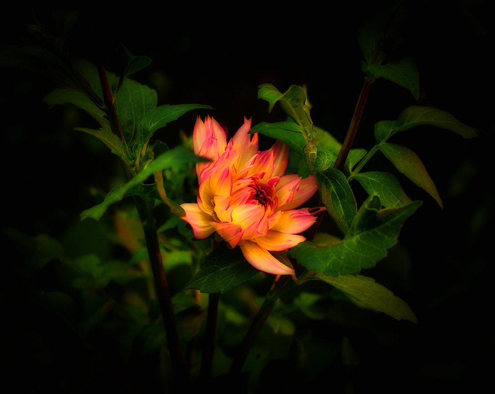 Огненный цветок - Людмила Фил