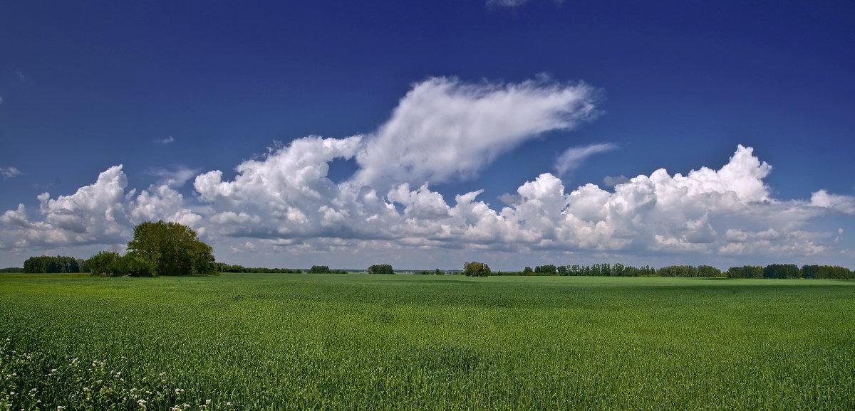 Хлебной поле - Виктор Четошников