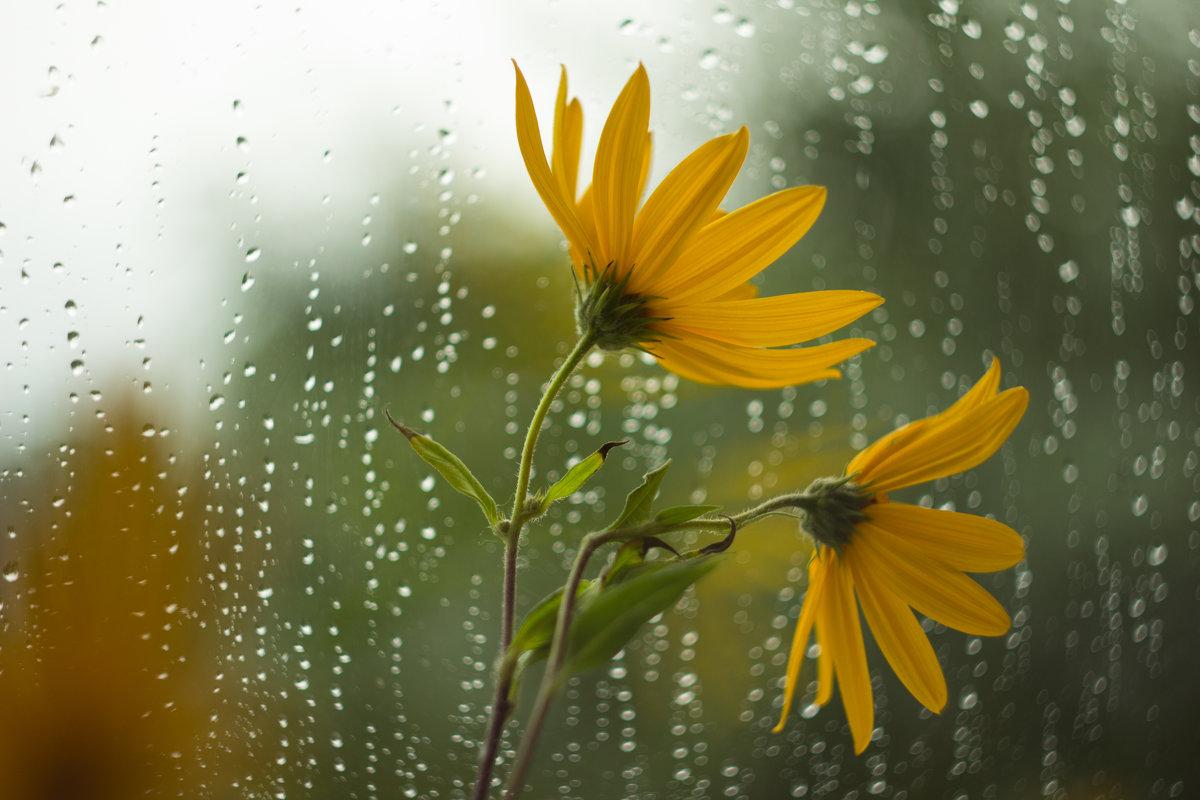 летний дождь... - Саша Ш.