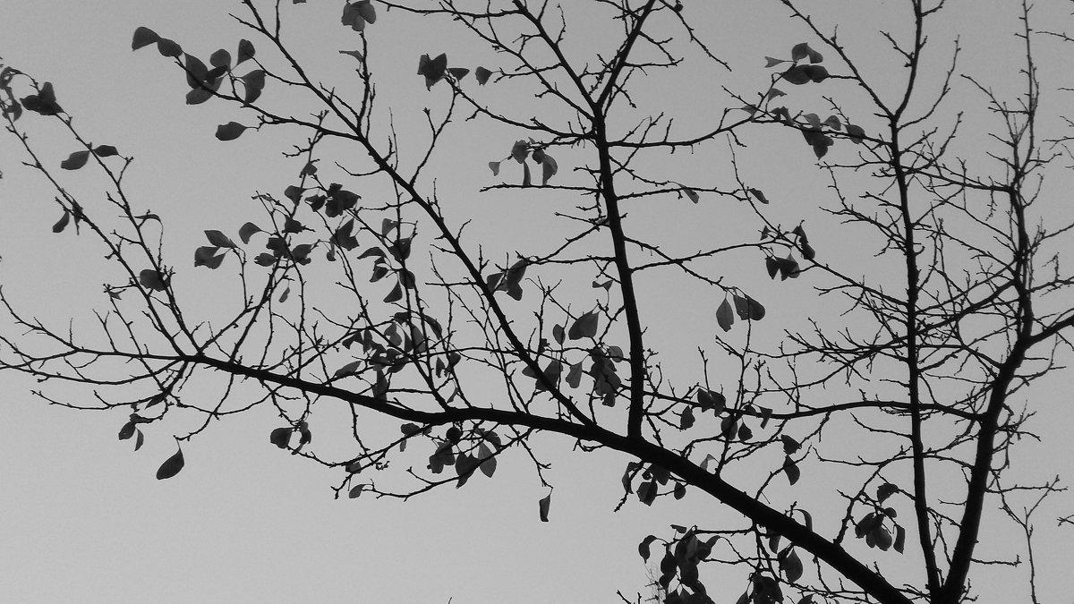 Япония зимой - Виктория Нефедова