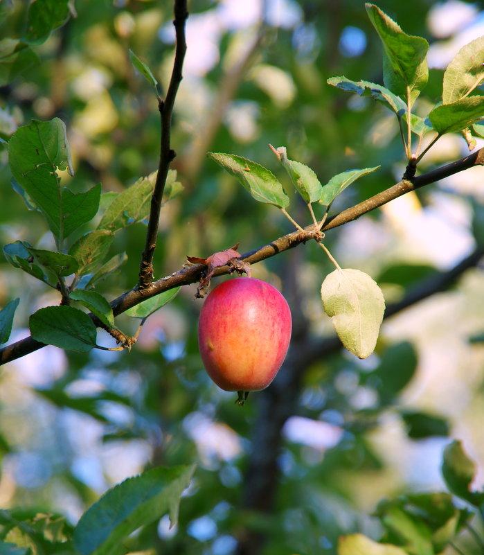 Наливное яблочко - Валерий Новиков