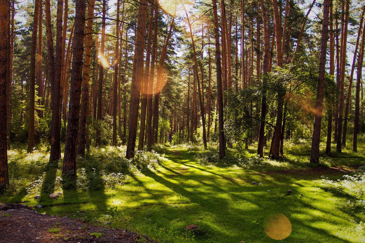 Просто лес - Олег Дорошенко