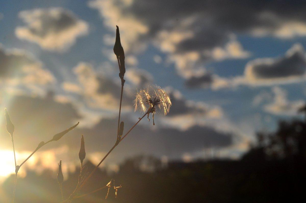 Софиты для сорняка - Albina