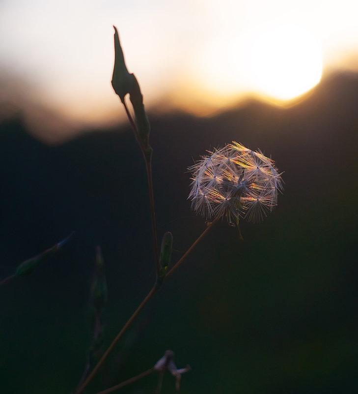 Волшебный свет - Albina
