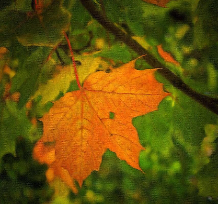 Осенний незнакомец.... - Tatiana Markova