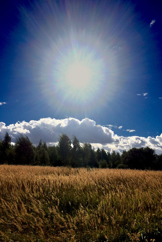 солнце - Валерия Святогорова