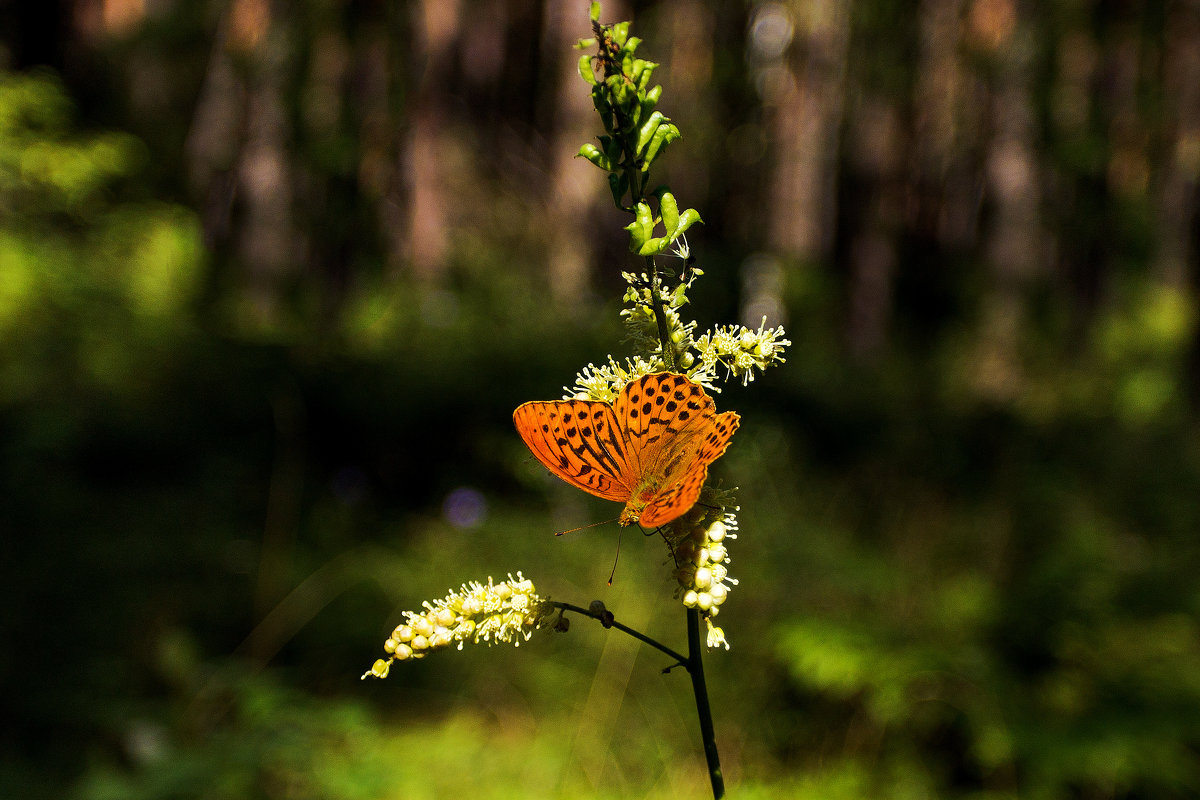 Бабочка - Олег Дорошенко