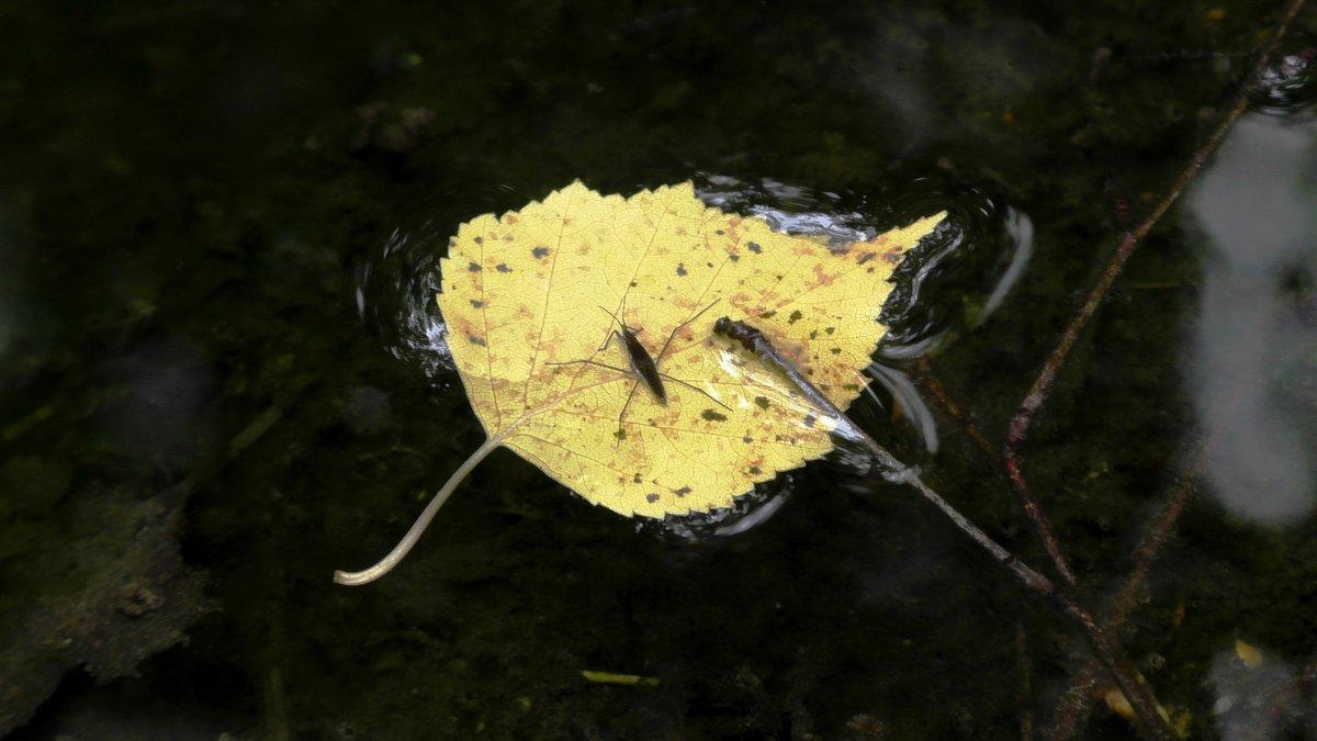 Путешествия водомерки - Ирина Останина
