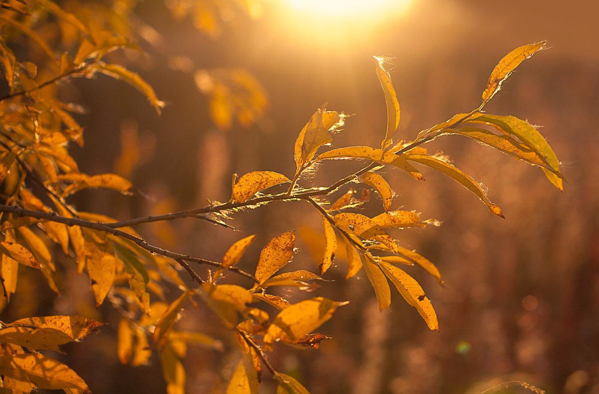 Осень... - Оксана Васильева