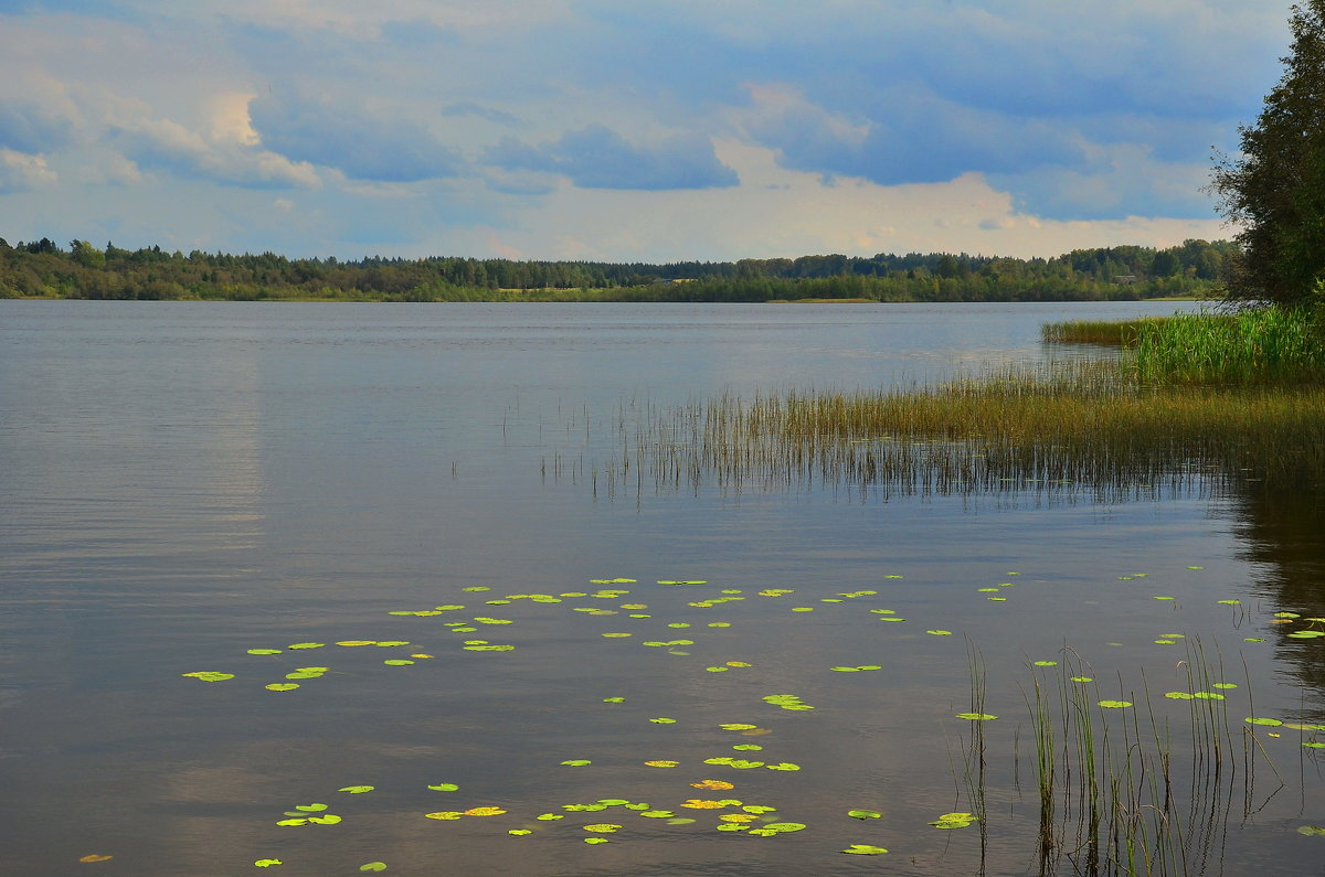 У озера - Николай Танаев