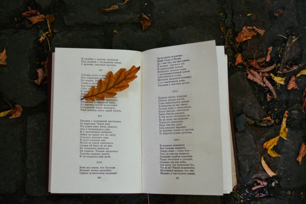 Осеннее чтение - Света Кондрашова
