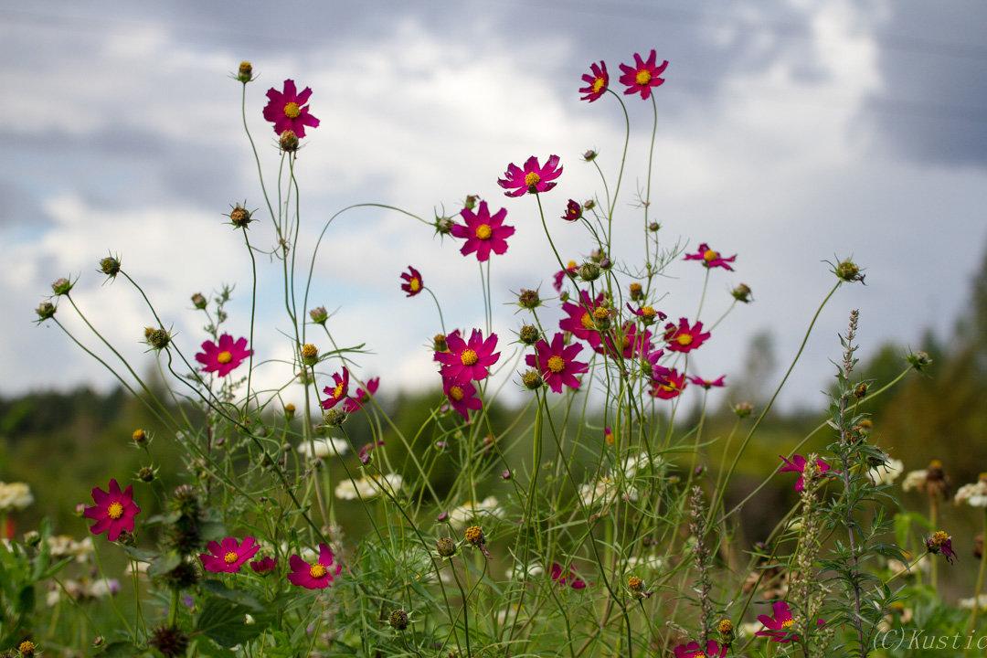 Цветы сентября - Валентина Ломакина