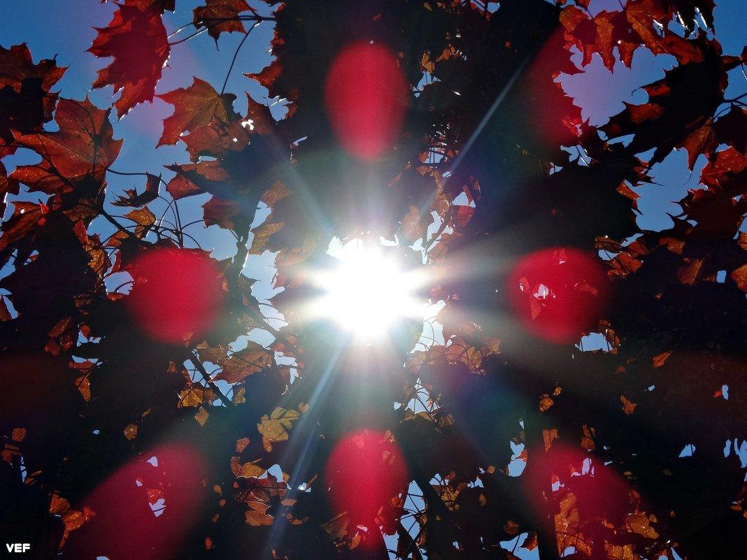 Солнечный осенний день - Fededuard Винтанюк