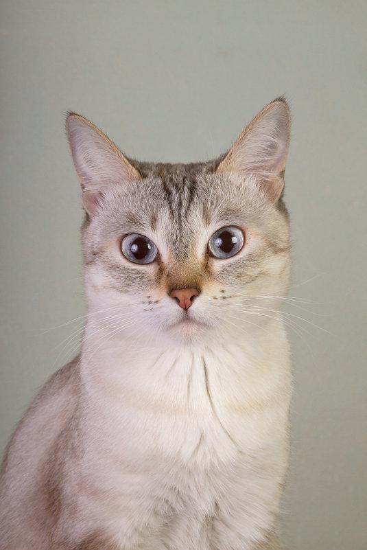 Я кошка-фотомодель! - Natalia Petrenko
