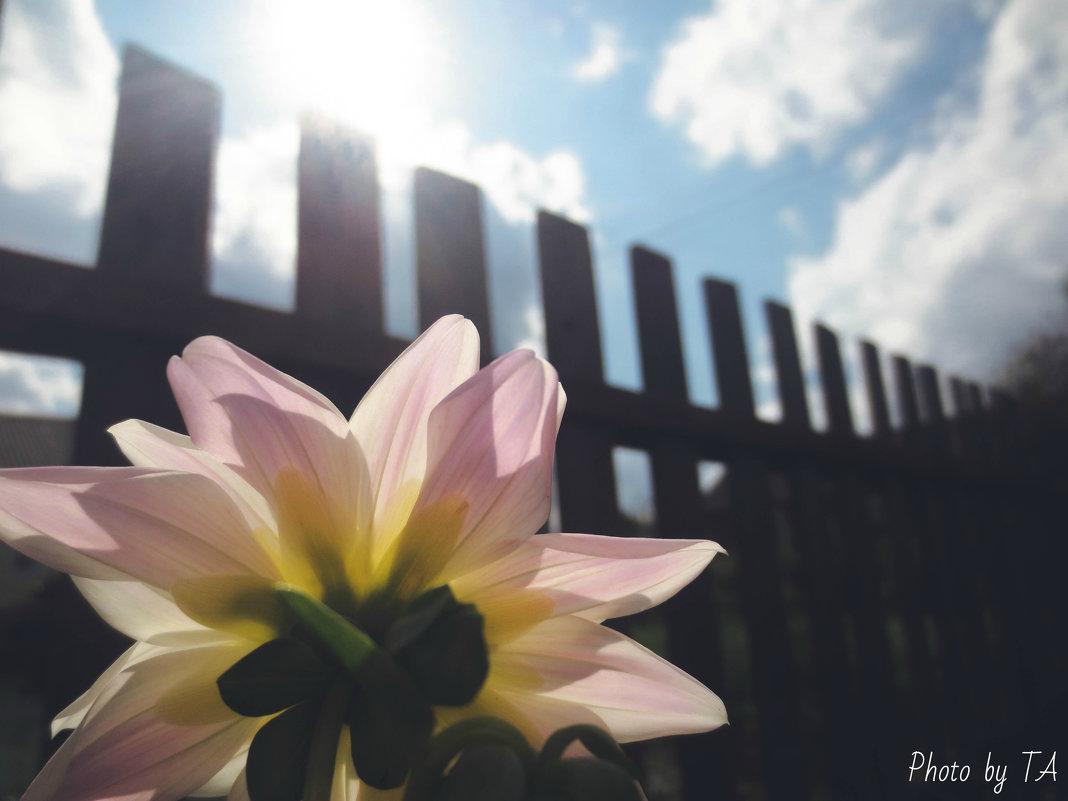 цветок - Александра Тетерина