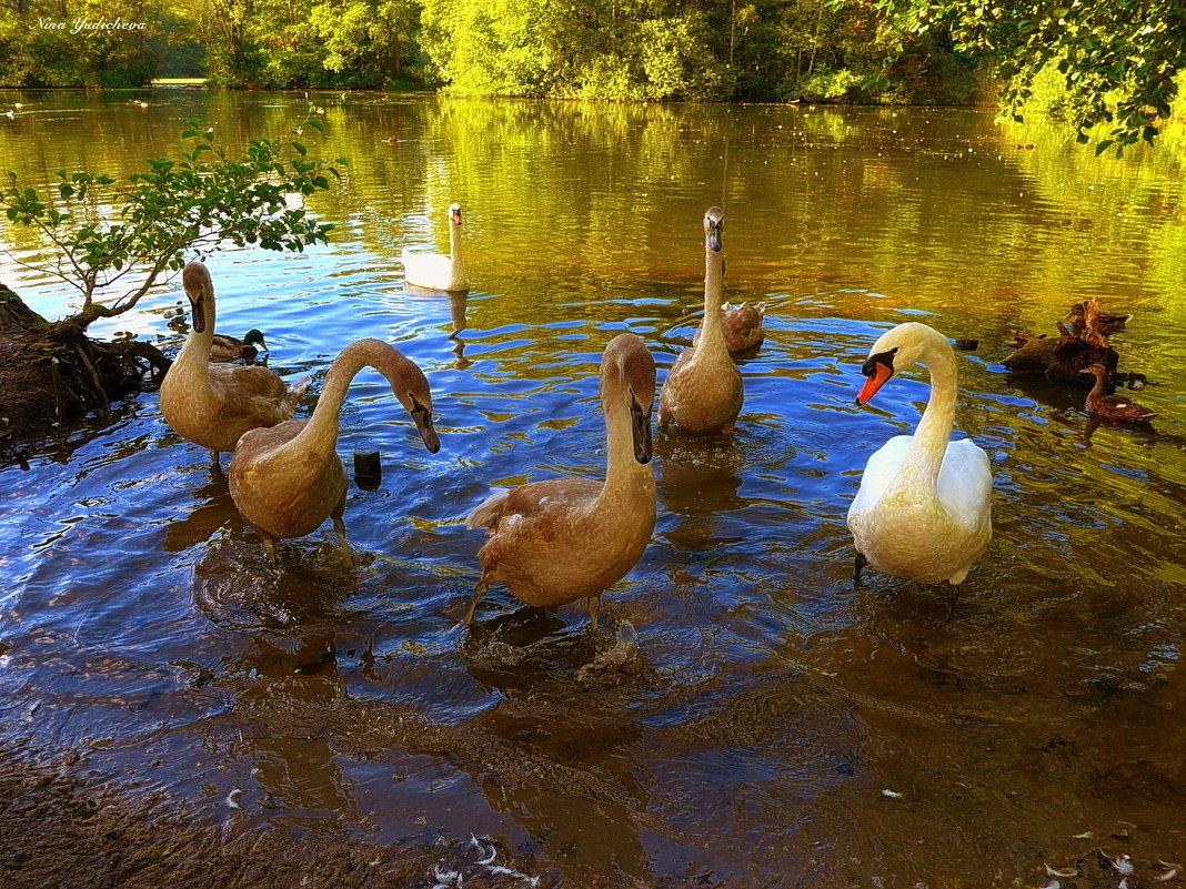 """Лебединое озеро (серия) """"Мы готовы к фотосессиии!"""" - Nina Yudicheva"""
