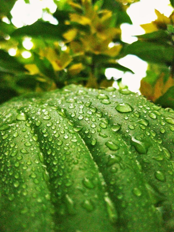 После дождя - Анна
