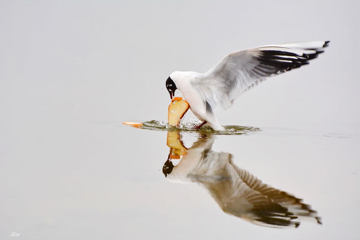 Отражение. - Paparazzi