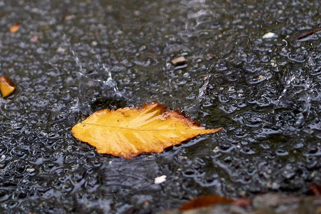 Сентябрьский дождь - НикЛеод