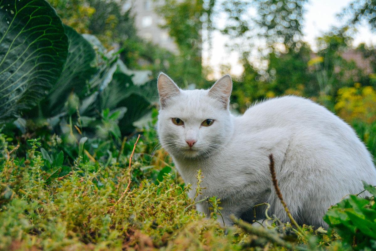 В огороде - Света Кондрашова