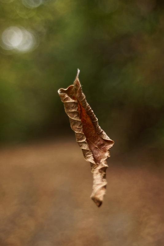 Осень - Василий Малыш