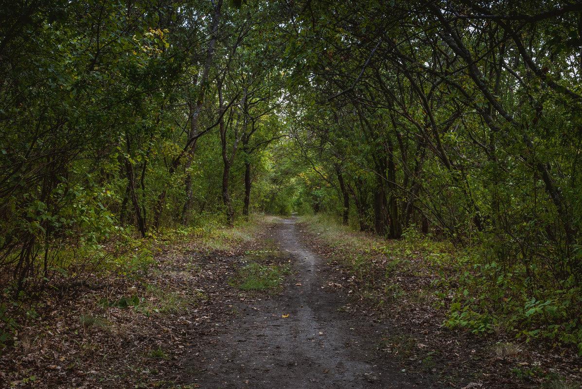 лесная тропа - Алина Гриб