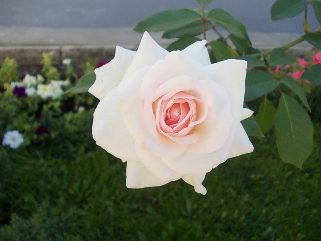 Роза Святогорья 2 - Викторина Срыбна