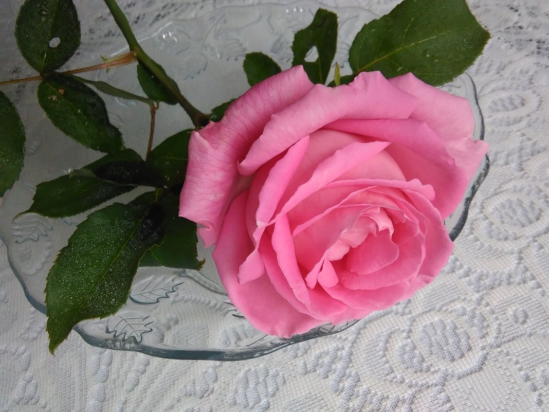 Утро начинается с цветов - Mariya laimite