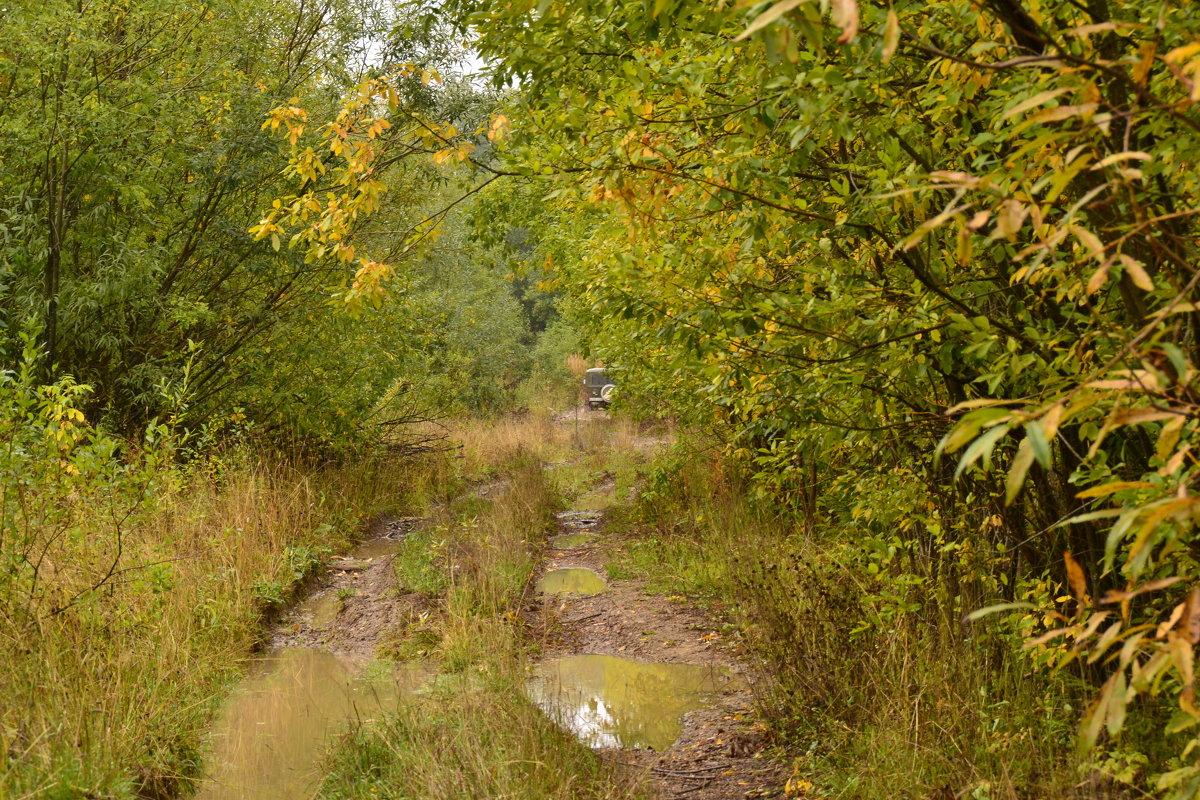 Лесная дорога после дождей... - petyxov петухов