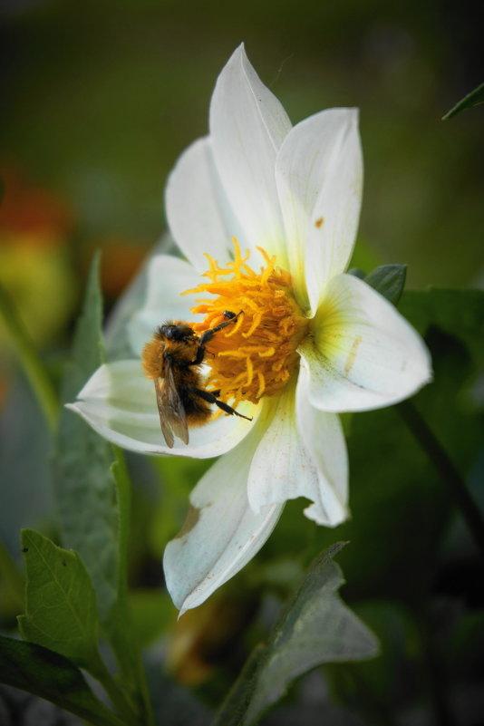 Пчелка - НикЛеод