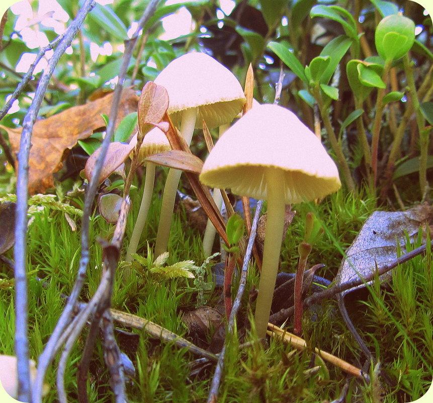 Непонятный гриб лесной.. - Галина Полина