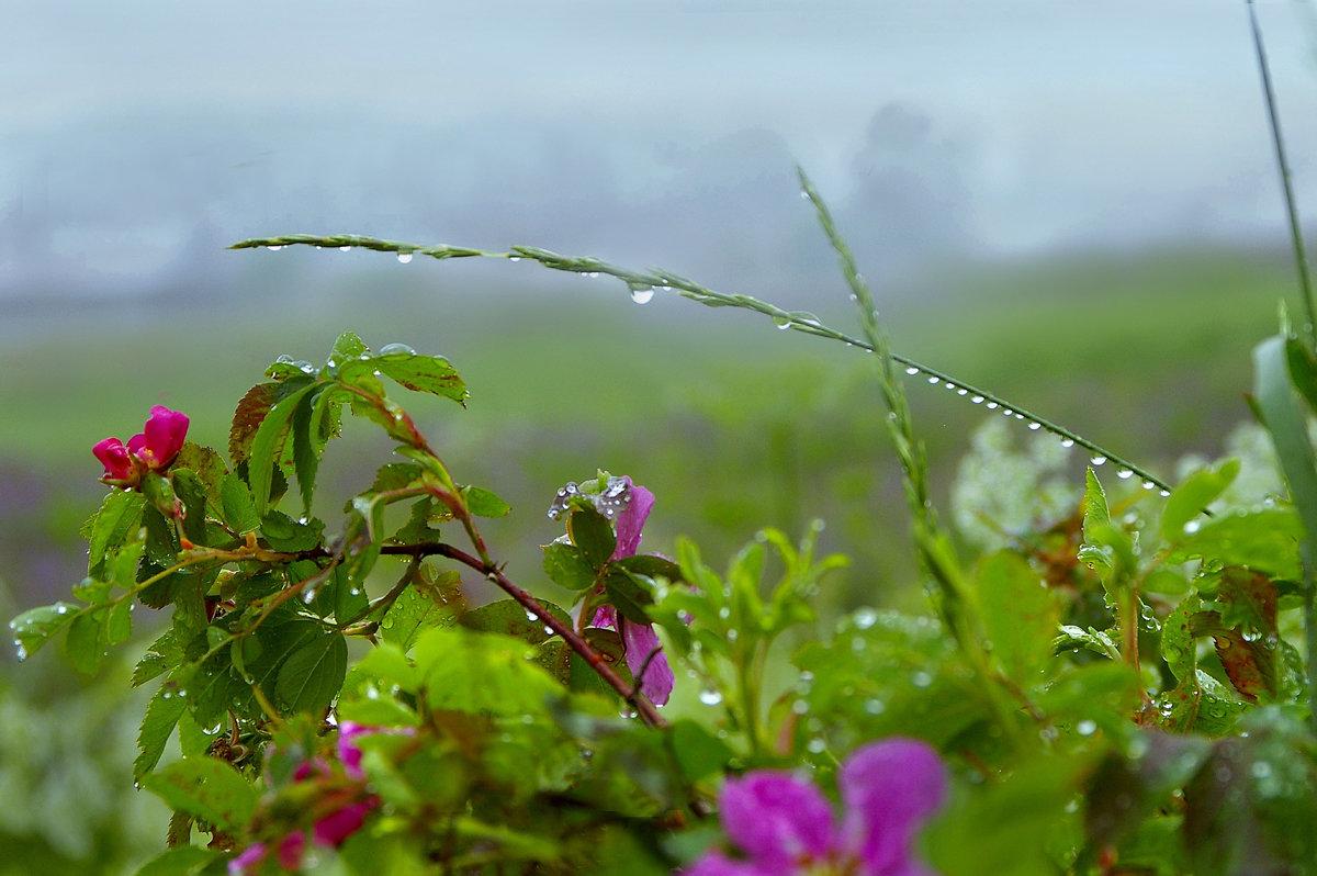 Дождливый день - Валерий Талашов