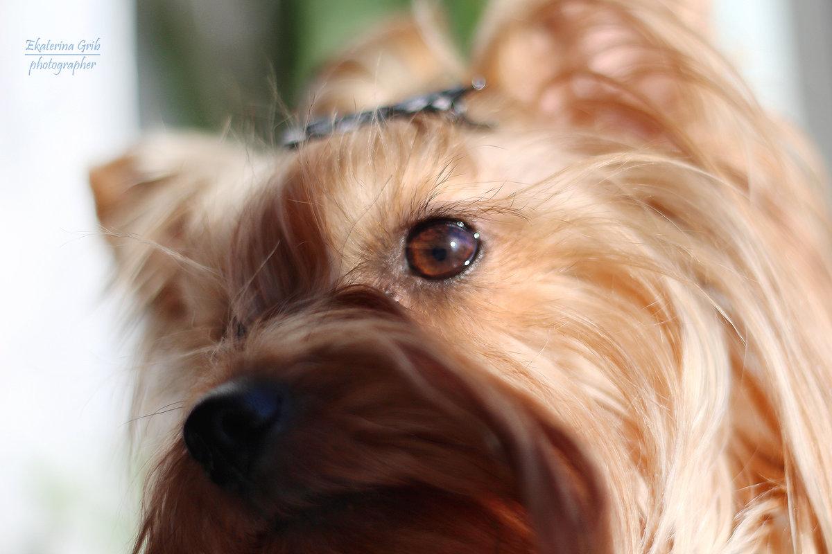 Моя любимая собака - Екатерина Гриб