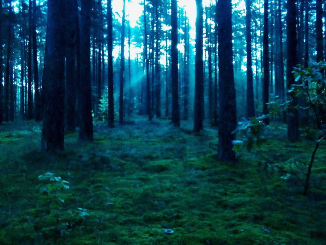 Утро в лесу - Evgenij Schleinikov