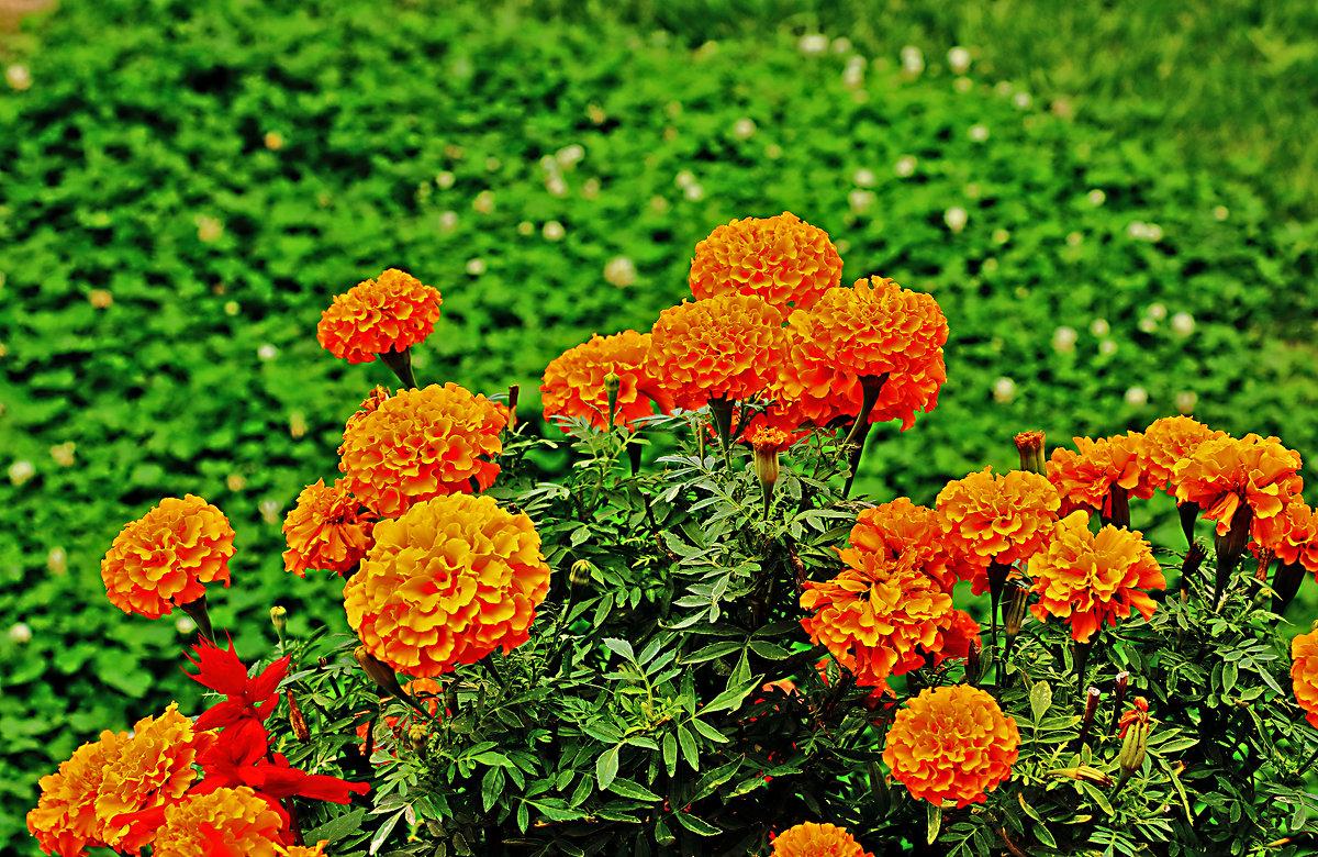 Сентябрьские цветы - Светлана