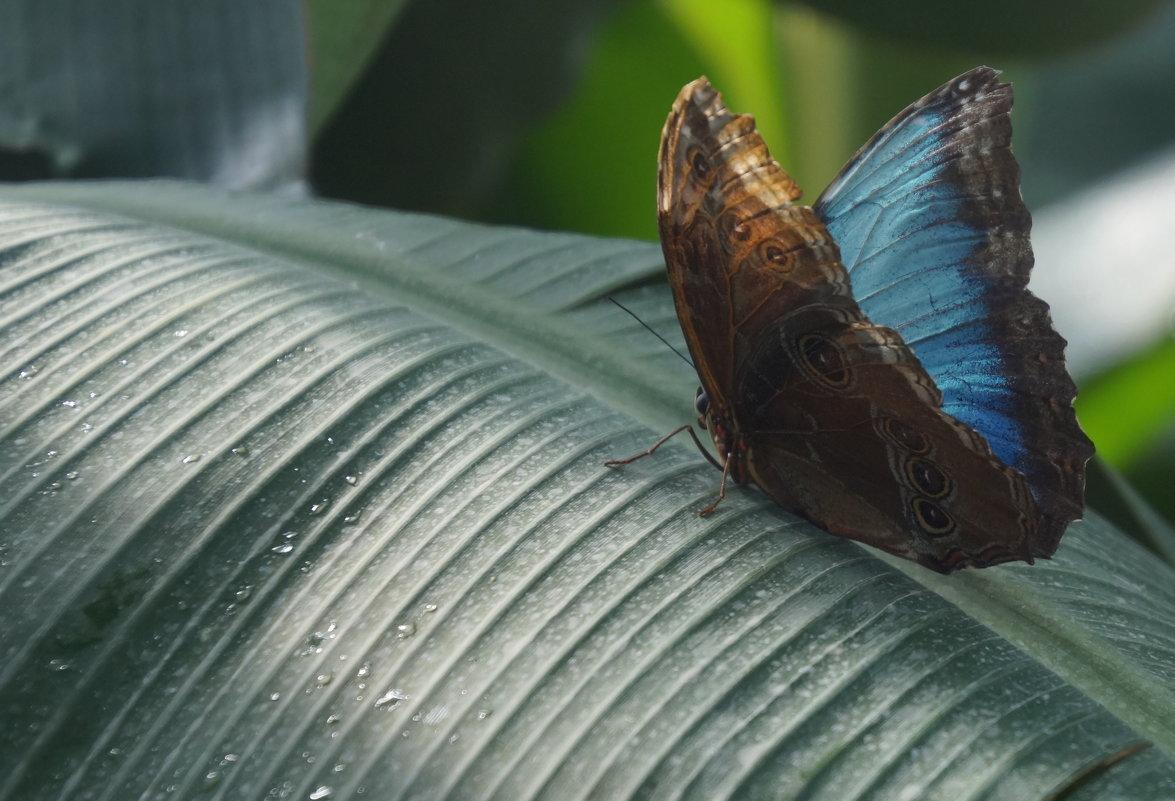 Бабочка - Larisa Freimane